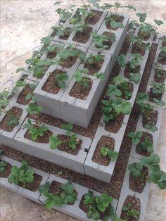 garden near me Strawberry Bed Strawberry Bed Strawberry Bed Strawberry Bed Strawberry Beds, Strawberry Garden, Strawberry Plants, Garden Yard Ideas, Garden Beds, Garden Projects, Cinder Block Garden, Vegetable Garden Design, Garden Structures
