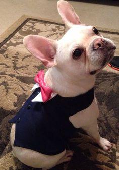 Navy Blue Dog Wedding Tuxedo