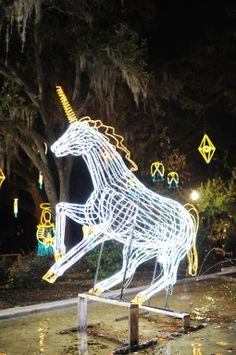 An annual tradition that began in the late 1980s, Celebration in the Oaks is a family-friendly event that only happens after dark.