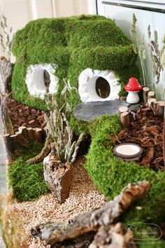 Coolest Hamster terrarium.  If I should ever cave and get the kids hamsters...the cage will look like this!