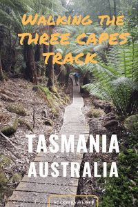 Want to go hiking in Tasmania? Here is my complete guide to walking the Three Capes Track, 4 days of hiking solo from Porth Arthur to Fortescue Bay. Hiking Dogs, Hiking Trails, Hiking Gear, Hiking Backpack, Hiking Essentials, Hiking Photography, Day Hike, Tasmania, Walking Tour