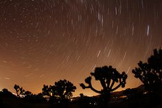 Night Sky Over Joshua Trees