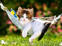 Hanging out in my new hammock