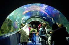 Museum Night was fin-tastic! Ocean Aquarium, Cape Town South Africa, Oceans, Museum, The Incredibles, Events, Night, Museums