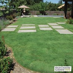 UC Verde buffalo grass produces a dense turf of soft, bright-green, very fine leaf blades and is recommended for planting in the high heat conditions found in the lower elevation of the desert Southwest and California. We recommend using Organic Plant Magic as a root dip to spur grass plug growth. Drought resistant/drought tolerant plant (xeric).