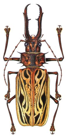 Besouros e seu mundo - Beetles and their world Weird Insects, Cool Insects, Bugs And Insects, Beetle Insect, Insect Art, Beautiful Creatures, Animals Beautiful, Reptiles, Insect Photos