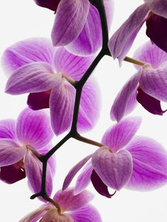 orchids my favorite flower