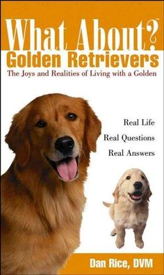 What About? Golden Retrievers