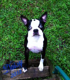 My Good Friend Daisy!