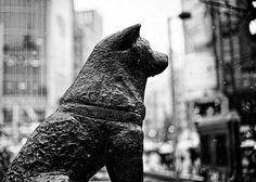 Hachikō Waits | by jdhilger
