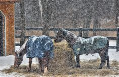 A #wintery scene but as long as there is hay, the #horses are fine with the #weather. www.shadyridgephotography.com