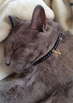 Cat collar cat harness cat lish cat id tags pet id personalized cat collar cat custom cat tag custom collar for cat tag cat id kitten collar by OlaJewelryDesign on Etsy