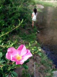 Sweetbriar by the River: A Romance in Pictures and Rose Elixir Recipe » The Medicine Woman's Roots