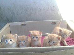 gatitos bebe