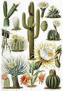 220px-Various_Cactaceae.jpg (220×314)