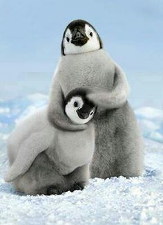 Penguin noogie time