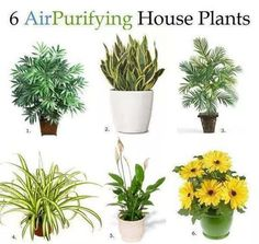 6 Purifying air plants for the home....wish I knew the names of these, but they are very familiar & can be easily identified @ any plant nursery.