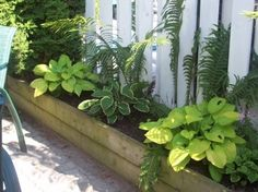 Planters along the fence