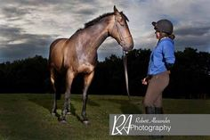 evening horse