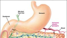 Bile Duct, Health Snacks, Dental Health, Good To Know, Diabetes, Nursing, Sweets, Travel, Medicine