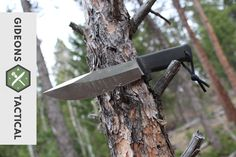 Fallkniven A1: My Favorite Stainless Steel Survival Knife? - YouTube