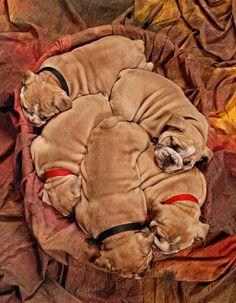 Snuggle, snuggle, snuggle
