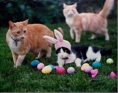 funny easter eggs pictures - Google Search