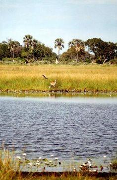 Botswana » Okavanga Delta