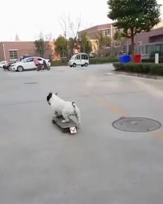 Cute Puppies, Cute Dogs, Dogs And Puppies, Cute Animal Videos, Funny Animal Pictures, Cute Little Animals, Cute Funny Animals, Funny Dog Videos, Funny Dogs