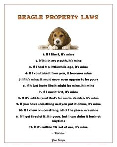 Beagle Property Laws