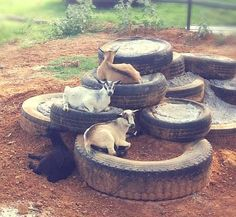 DIY Tiered Tire Goat Playground - PetDIYs.com