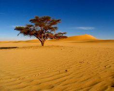Desert...