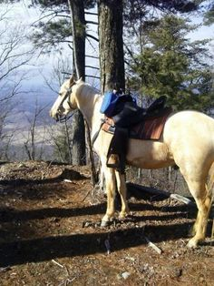 Wouldn't you like to take a horseback ride? Looks fun & great views~!  Starr Mt -byCowDoy #ramblr #outdoors #nature #trails #horseback #riding