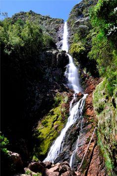 Yet to see - Tasmania Holiday Destinations, Travel Destinations, Australian Continent, Vacations To Go, Need A Vacation, Next Holiday, Beautiful Waterfalls, Tasmania, Wanderlust Travel