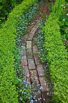 Beautifully edged path...forget me not! Love this