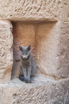 Cats In Ancient Egypt, In Ancient Times, Egyptian, Modern, Animals, Ancient Egypt, Bonjour, Cats, Trendy Tree