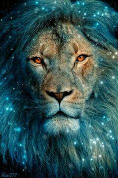 Lion gif