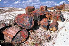 Petrified Forest, AZ