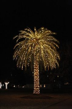 Decorated palm trees for Christmas! My husband's idea of a decorated ...