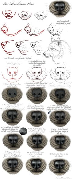 I would have called this a tutorial, only it really isn't all that accurate to real wolf anatomy-- and isn't a complete tutorial. It's just how I tend to draw them. This is kinda old xD But not ter...