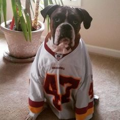 "Game day is ""Wuggie's"" favorite day of the week. #Redskins #HTTR"