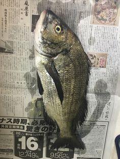 Fishing, Animals, Animales, Animaux, Animal, Animais, Peaches, Pisces, Gone Fishing
