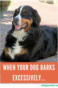 When your dog barks excessively... - Just for Die Hard Dog Lovers #DogBarking