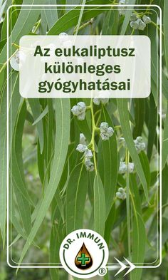 Health 2020, Trainer, Health Fitness, Herbs, Herb, Fitness, Health And Fitness, Medicinal Plants