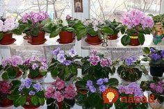 Má izbovky ako z kvetinárstva a kvitnú ako na baterky: Pestovateľka vám prezradí úplne jednoduchý zlepšovák, vďaka ktorému ich budete mať aj vy! House Plants, Orchids, Flora, Home And Garden, Nursery, Gardening, Day Care, Baby Rooms, Garten