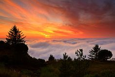 Santa Cruz Mountains | ... and raised in the beautiful santa cruz mountains of california for the