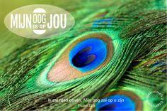 Ik zal raad geven, Mijn oog zal op u zijn. Psalm 32:8 #God, #Luisteren, #Rust, #Vertrouwen http://www.dagelijksebroodkruimels.nl/psalm-32-8-v2/