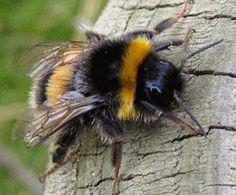 The Wonderful Bumblebee