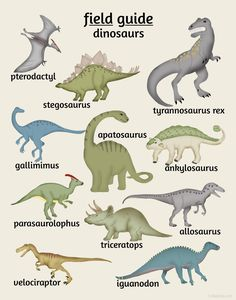 Dinosaur Poster, Field Guide Series
