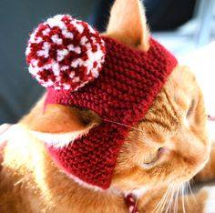 Christmas Stocking Stuffer Gifts for the Kitty Cat: Red and White Pom Pom Cat Hat by bitchknits @ Etsy Costume Chat, Pet Costumes, Chat Crochet, Crochet Hats, Crazy Cat Lady, Crazy Cats, Knitted Cat, Cat Hat, Christmas Animals